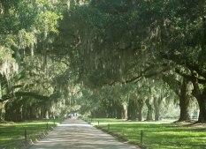 Oak Lined Lane