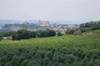 View of Orvieto2-Winery