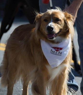 Gwinnett Humane Society 2