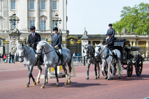 Royal Horses in Training