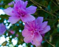 Pink Flower Tree 2